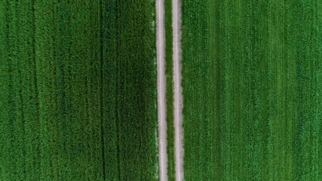 green fields divided by country road. aerial view - line art video stock e b–roll