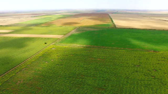 航空写真: 農地の緑のフィールド - クワッドコプター点の映像素材/bロール
