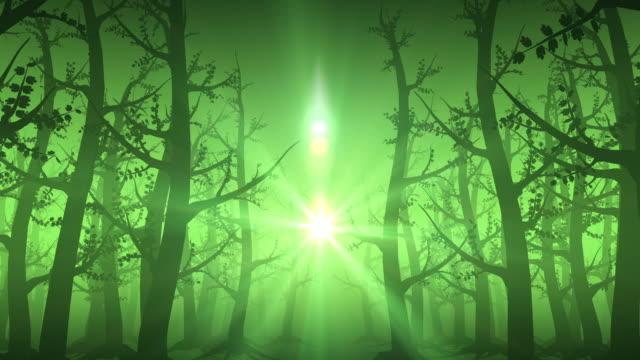vídeos y material grabado en eventos de stock de verde del bosque de niebla bucle - etéreo descripción física