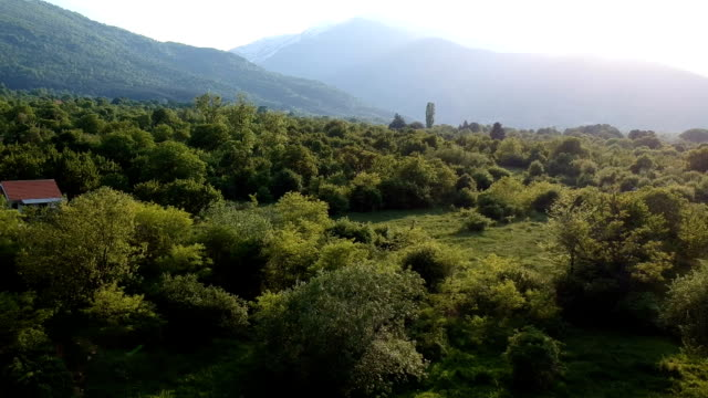 Green forest aerial view - nature background