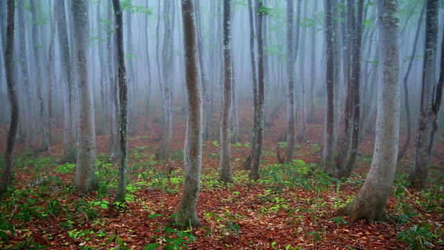 green forest at rainy day,dolly shot - plusphoto stock videos & royalty-free footage