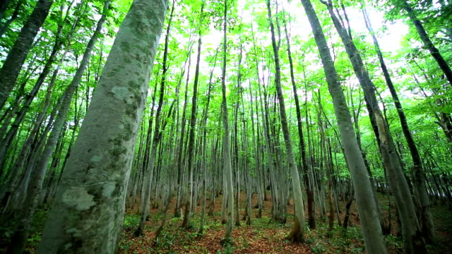 green forest - dolly shot - plusphoto stock videos & royalty-free footage