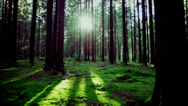 stockvideo's en b-roll-footage met green forest in the sunlight tracking shot - buiten de steden gelegen gebied