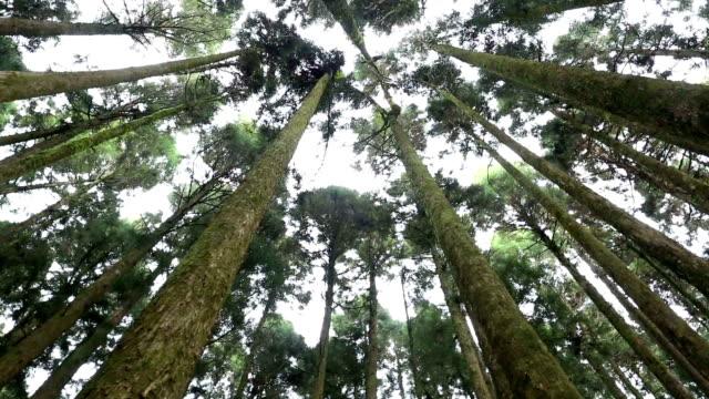 Green Forest pantilt VDO