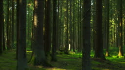 Green Forest Tracking Shot