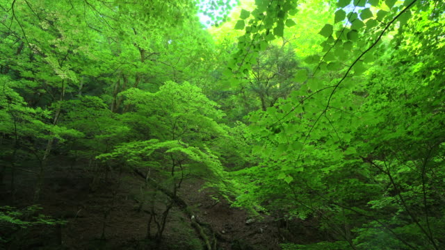 green forest - aomori prefecture stock videos & royalty-free footage