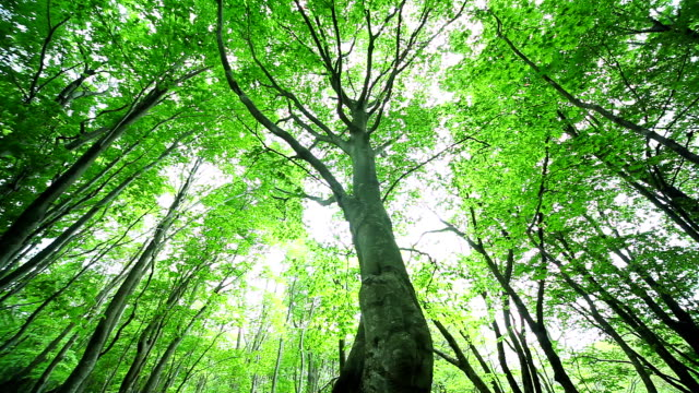 verde foresta - plusphoto video stock e b–roll