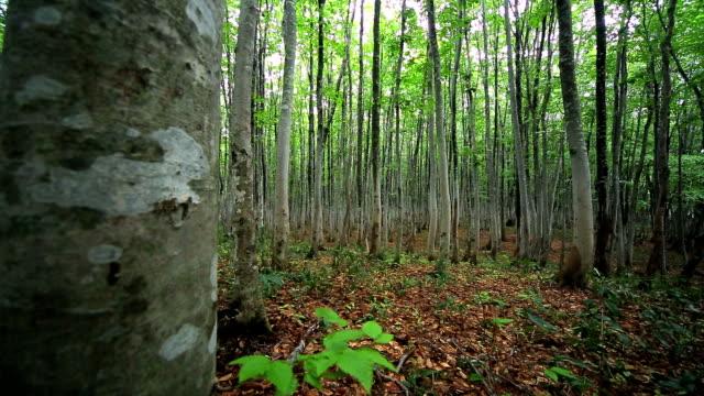 緑の森林、ドリー撮影 - 自生点の映像素材/bロール