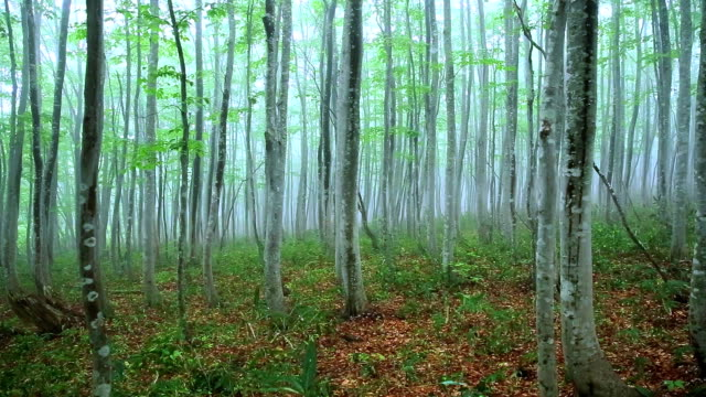Green forest,dolly Shot