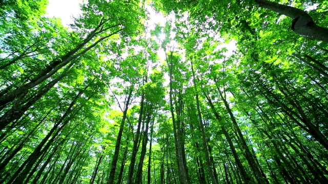 Green forest,Green leaves