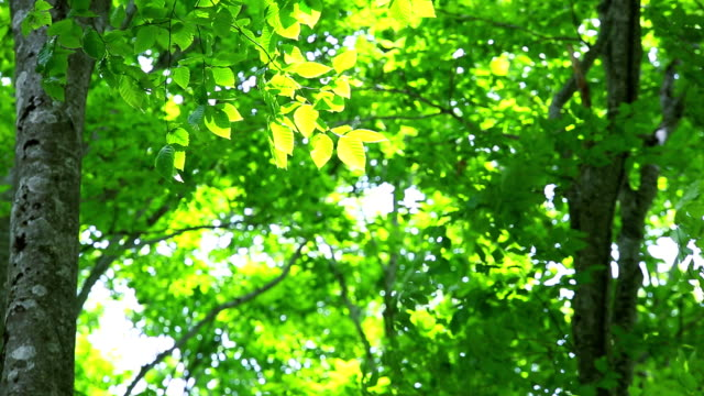 green forest,green leaves - lush stock videos & royalty-free footage