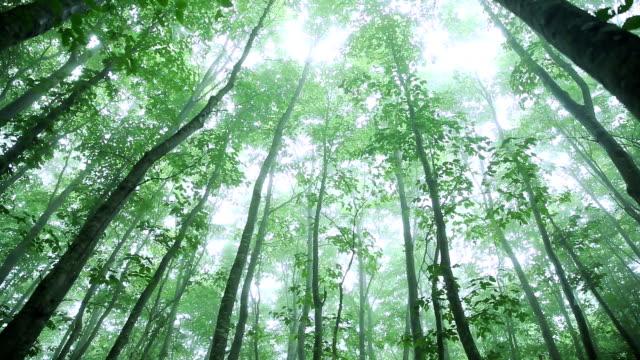 verde foresta, foglie verdi - plusphoto video stock e b–roll