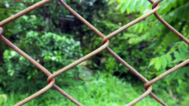 green garden behind wire fence - wire mesh fence stock videos & royalty-free footage