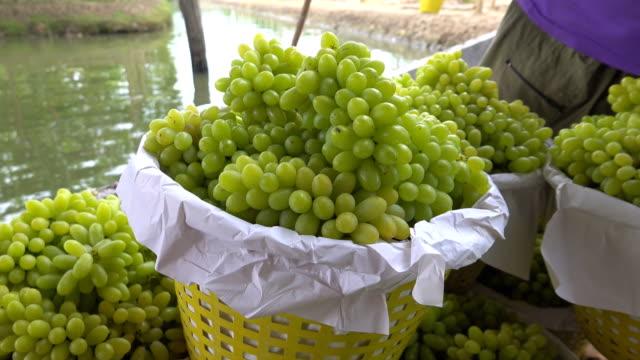 vidéos et rushes de raisins verts vignoble - plante grimpante