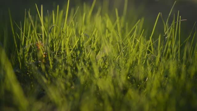 Green grass at sunlight
