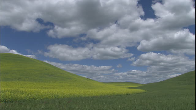 green grass blankets rolling hills. - palouse stock videos & royalty-free footage