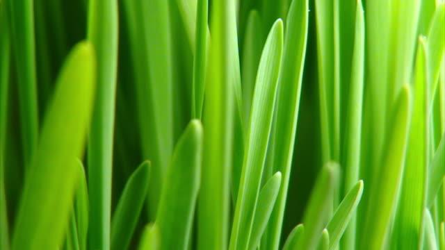 Grünes Gras wächst HD -