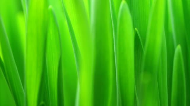 緑の芝生成長 hd - 緑点の映像素材/bロール