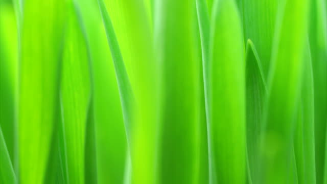 Green grass growing HD