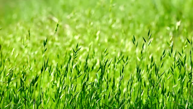 green grass in a summer day - tall high stock videos and b-roll footage