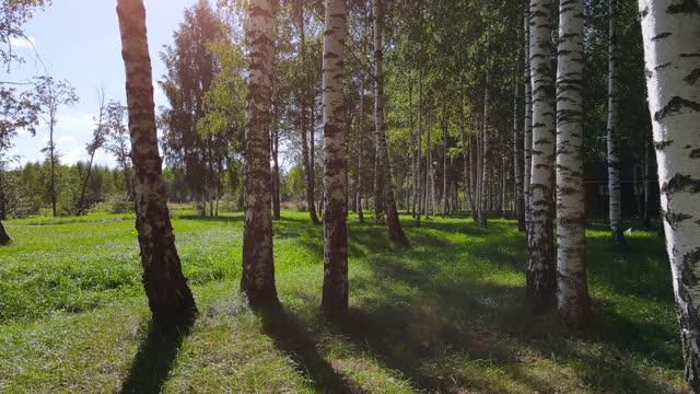 公園内の緑の草。自然公園 - カバノキ点の映像素材/bロール