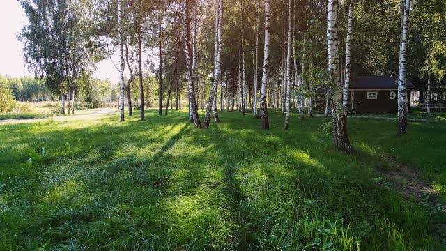 公園内の緑の草 - カバノキ点の映像素材/bロール