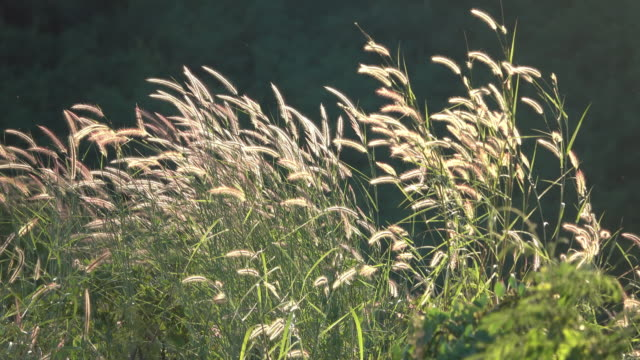 4K Green grass in wind