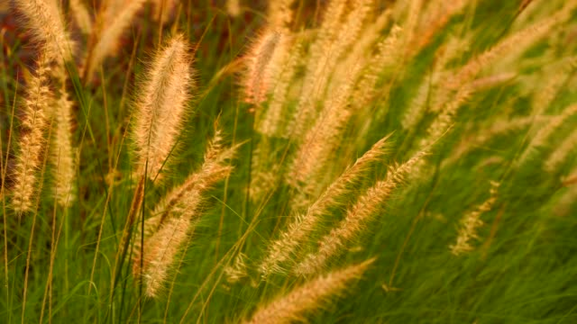 green grass is movement along the wind, outdoor garden. - long stock videos and b-roll footage