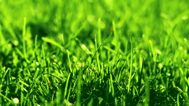 green grass on the wind in park. beautiful summer green background. - grass family stock videos & royalty-free footage