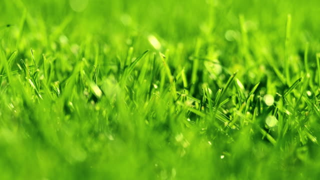 green grass on the wind in park. beautiful summer green background. - soccer field stock videos & royalty-free footage
