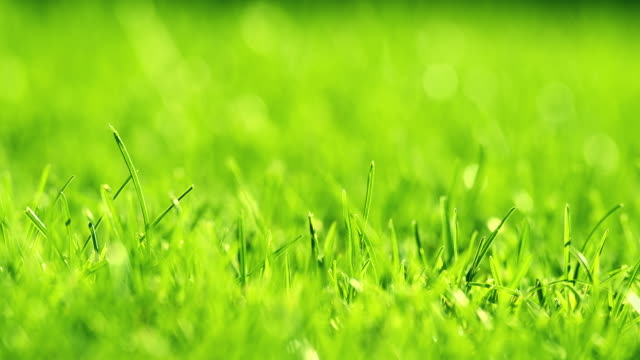 vídeos de stock e filmes b-roll de green grass on the wind in park. beautiful summer green background. - campo de futebol