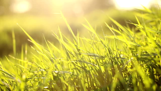 green grass on the wind - blade of grass stock videos & royalty-free footage