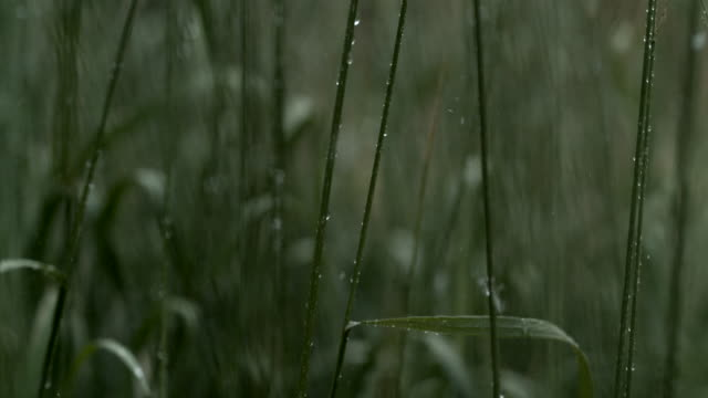 green grass slow motion macro rain - grass stock videos & royalty-free footage
