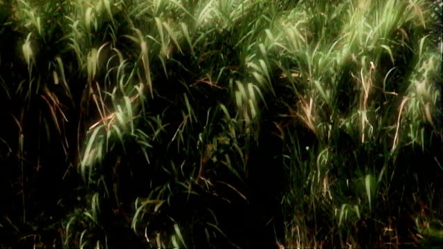green grass sways in a gentle breeze. - impressionism stock videos & royalty-free footage