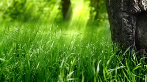 緑の芝生の木。 - grass点の映像素材/bロール