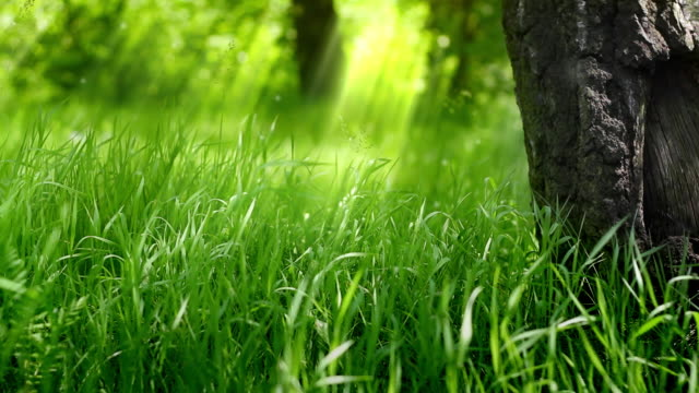 Green grass under the tree.