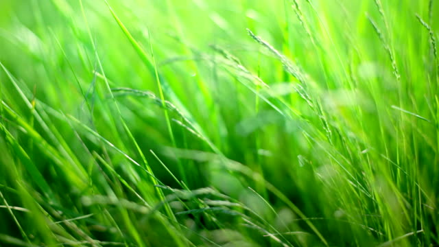 green grass - saturated color stock videos and b-roll footage