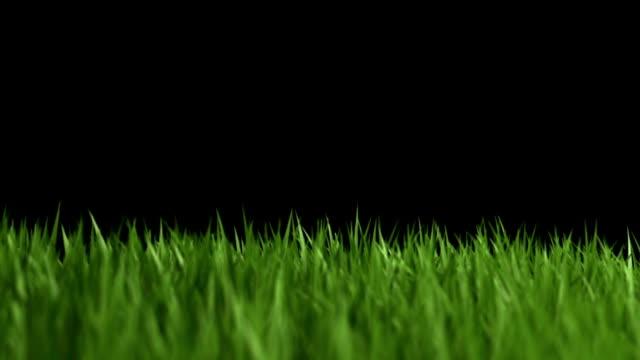 green grass - golfgreen bildbanksvideor och videomaterial från bakom kulisserna