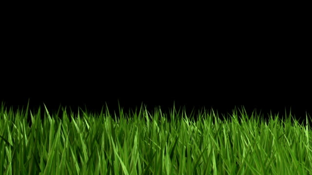 green grass - lawn stock videos & royalty-free footage