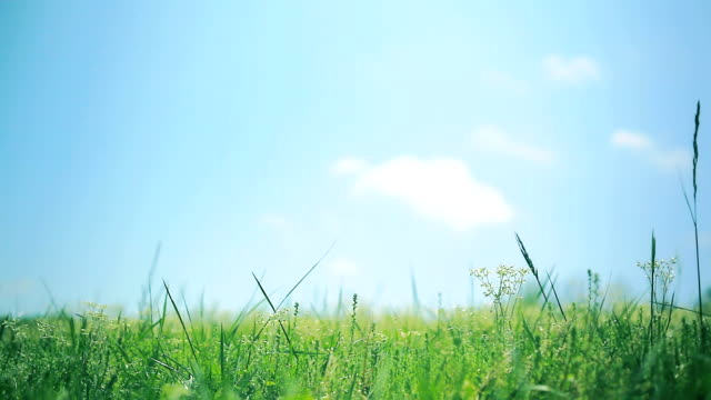 Green grass, white clouds and blue sky background