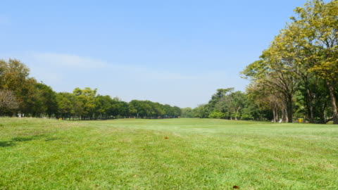 green grass yard in green park - public park stock videos & royalty-free footage