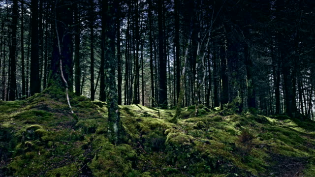 green hills covered with forest. beauty in nature. scotland - grass area stock videos and b-roll footage