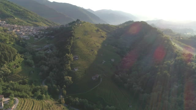 green hills vineyards - hay fever stock videos and b-roll footage