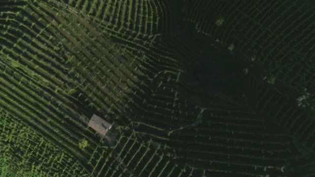 vídeos de stock e filmes b-roll de green hills vineyards - snail