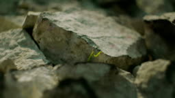 Green insect on a stone in the summer in the mountains