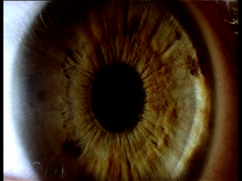 green iris of eye zoom into black pupil - sensory perception stock videos & royalty-free footage