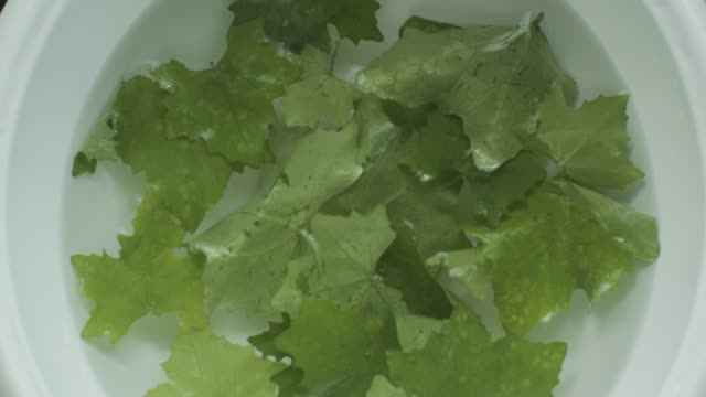 green ivy gourd on the water at the kitchen - gourd stock videos & royalty-free footage