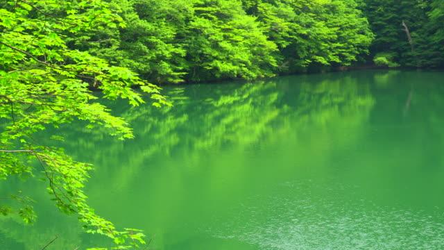 vídeos de stock, filmes e b-roll de lago verde/juniko twelve lakes - shirakami sanchi