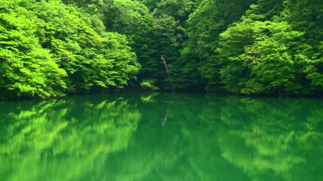 vídeos de stock, filmes e b-roll de lago verde / juniko doze lagos - shirakami sanchi