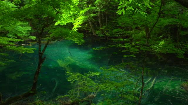 vídeos de stock, filmes e b-roll de lago verde/juniko doze lagos/wakitubonoike - shirakami sanchi